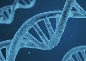 DNA Repair game